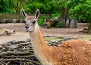 Zoo_Krefeld-06