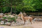Zoo_Krefeld-07