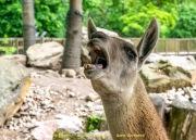 Zoo_Krefeld-10
