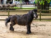Zoo_Krefeld-11