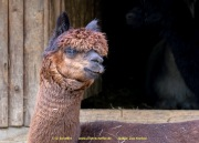 Zoo_Krefeld-14