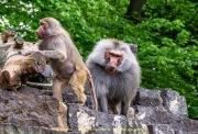 Zoo_Krefeld-16