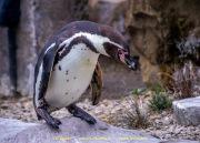 Zoo_Krefeld-20