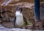 Zoo_Krefeld-21