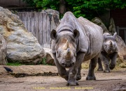 Zoo_Krefeld-25