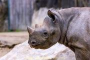 Zoo_Krefeld-29