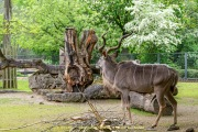 Zoo_Krefeld-39