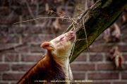 Zoo_Krefeld-44