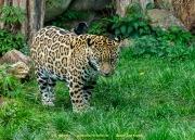 Zoo_Krefeld-46