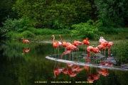 Zoo_Krefeld-49