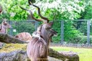 Zoo_Krefeld-52