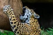 Zoo_Krefeld-61