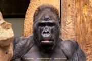 Zoo_Krefeld-67