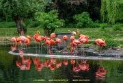 Zoo_Krefeld-69