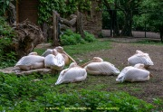Zoo_Krefeld-76