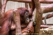 Zoo_Krefeld-77