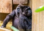 Zoo_Krefeld-79