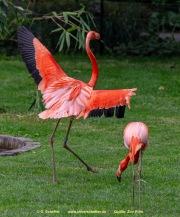 Zoo Koeln