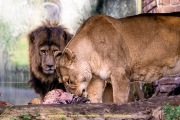 Zoo_Duisburg-015