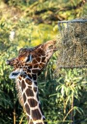Zoo_Duisburg-021