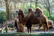 Zoo_Duisburg-024
