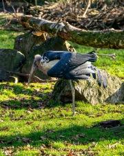 Zoo_Duisburg-026