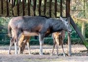 Zoo_Duisburg-040