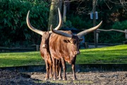 Zoo_Duisburg-041