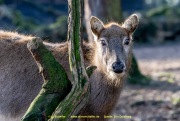 Zoo_Duisburg-043