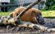 Zoo_Duisburg-044
