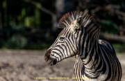 Zoo_Duisburg-053