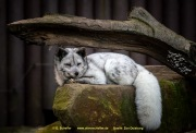 Zoo_Duisburg-061