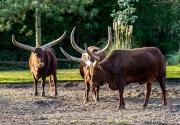 Zoo_Duisburg-065