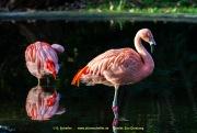 Zoo_Duisburg-072