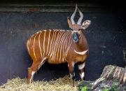 Zoo_Duisburg-073