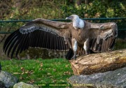 Zoo_Duisburg-083