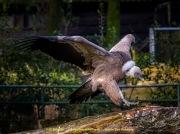 Zoo_Duisburg-085