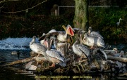 Zoo_Duisburg-090