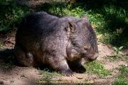 Zoo_Duisburg-101