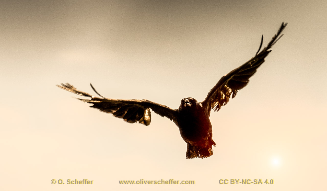 www.oliverscheffer.com