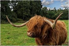 Scotland_tour_2015-92