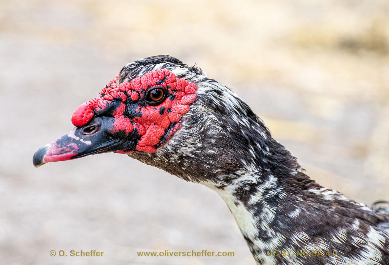 duck-02