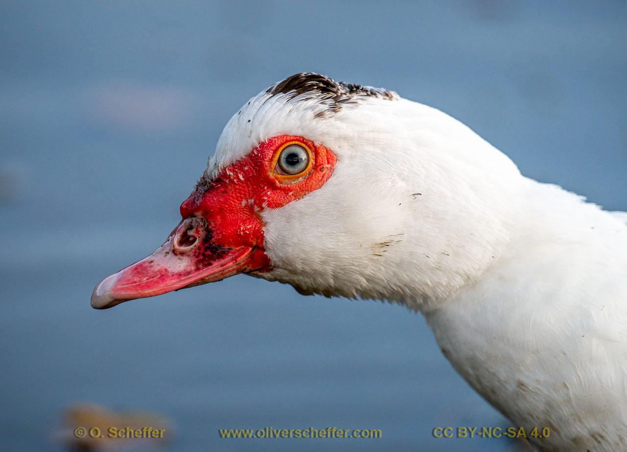 duck-28
