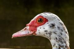duck-10