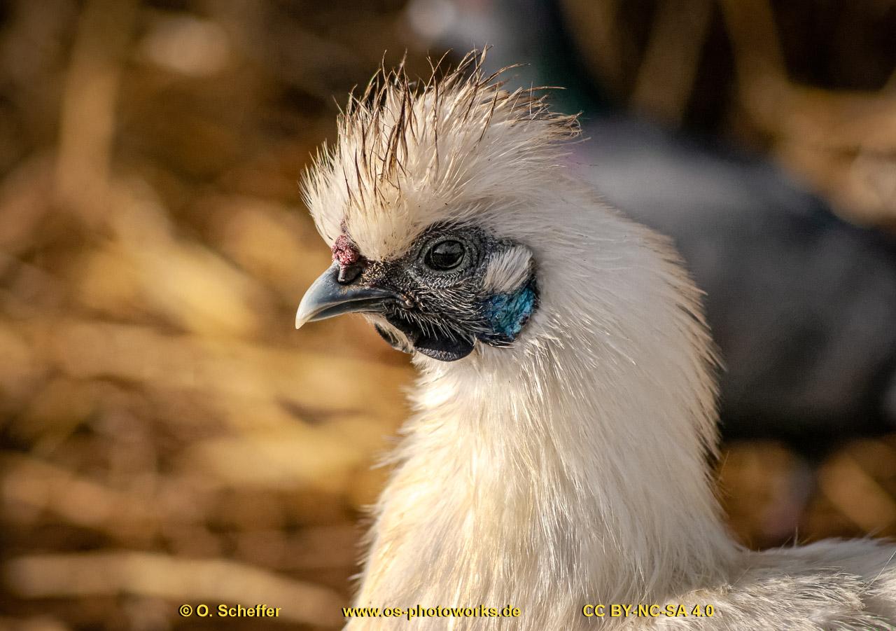 chicken-15