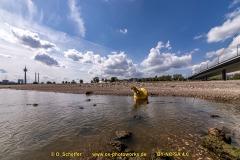 Niedrigwasser-21
