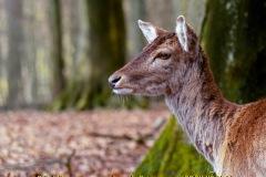 animalphotography at the gamepark Grafenberg in Duesseldorf (Germany)