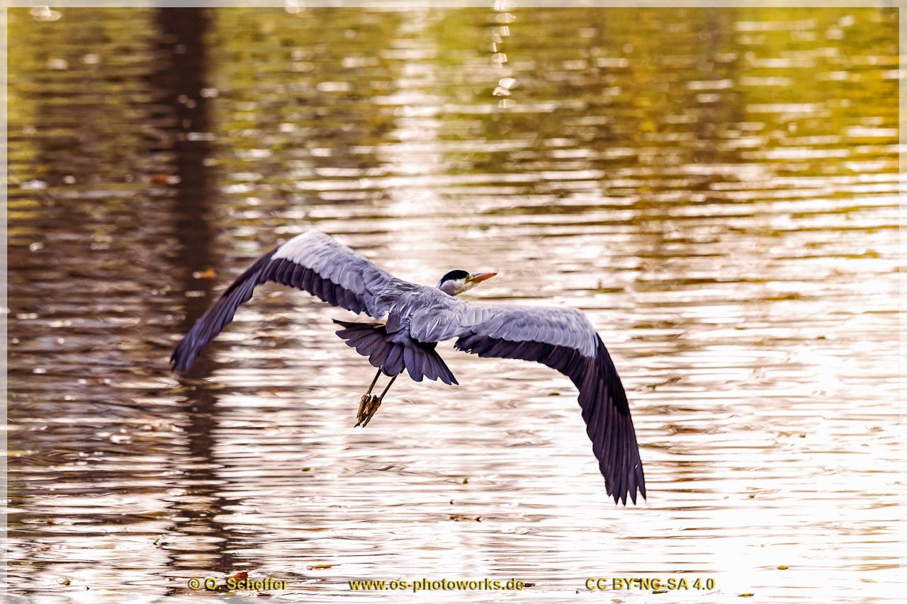 Reiher, heron