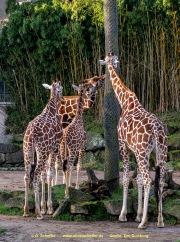 Zoo_Duisburg-008