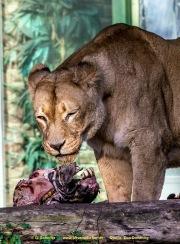 Zoo_Duisburg-016